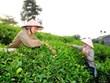 Thai Nguyen aspira a 27 mil millones de dólares de exportaciones