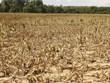 El Niño causa graves pérdidas al cultivo en provincia vietnamita