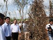Exigen aprovechar con eficiencia fuentes hídricas ante sequía en Binh Phuoc