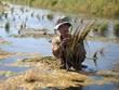 Ca Mau: salinización afectan 30 mil hectáreas de tierras para producción