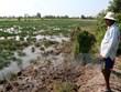Provincia de Vietnam construye compuertas para luchar contra penetración salina