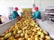 (Video) Aspira Vietnam a ingresar 43 mil millones de dólares por exportaciones agrícolas en 2020