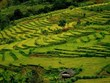 Belleza de las terrazas de arroz en la provincia vietnamita de Dien Bien