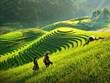 Vietnam aprueba estrategia nacional para el desarrollo de zonas montañosas y de minorías étnicas