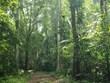 Provincia vietnamita redobla atención a preservación de biodiversidad