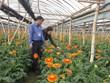 Hanoi destina 495 millones de dólares al programa de nueva ruralidad