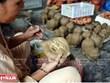 Reconoce Vietnam como patrimonio a la salsa de pescado y la cerámica de región central