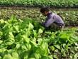 Impulsan Vietnam y Países Bajos cooperación en agricultura