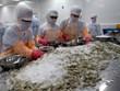 Ganan el calamar y el pulpo de Vietnam espacio en el mercado estadounidense