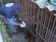 Rescatan en Vietnam a un oso negro asiático cautivo durante casi 30 años