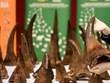 Entrega Vietnam cuernos de rinoceronte decomisados a Sudáfrica