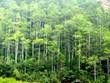 Promulgan en Vietnam estándares nacionales de manejo forestal