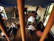 Tribunal francés escucha caso del Agente Naranja utilizado en guerra en Vietnam