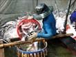 Exportaciones acuáticas de Vietnam crecen en dos meses