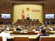 Asamblea Nacional de Vietnam analiza proyectos legales