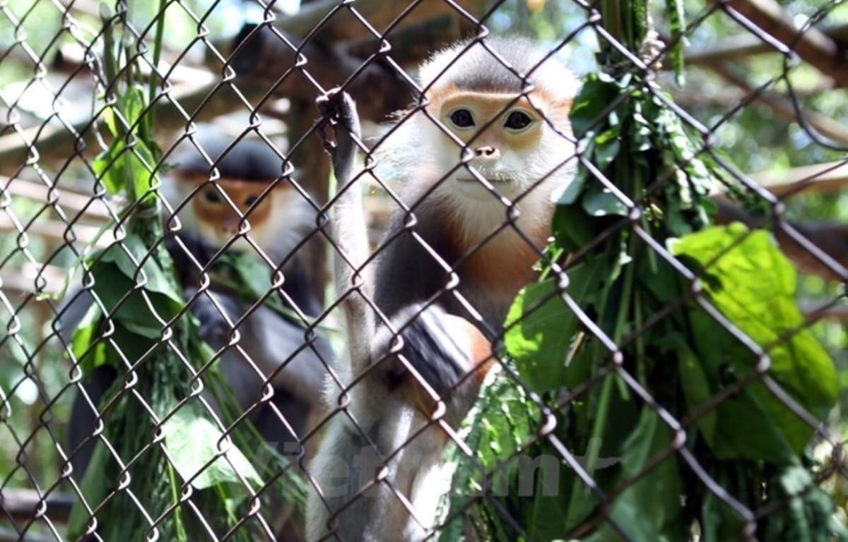 Numerosos iniciativas y soluciones contribuyen a la protección de la diversidad biológica en Vietnam durante los últimos 10 años. (Foto: Vietnam+)