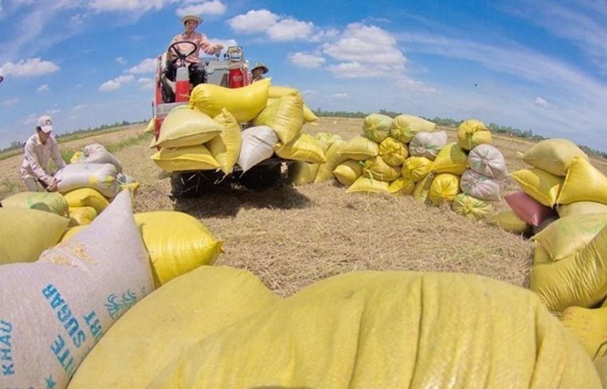 Vietnam busca diversificar mercados de exportación de arroz en medio del COVID-19
