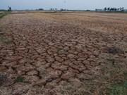 Sequía deja 50 mil hectáreas de tierras incultivables