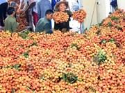 El lichi vietnamita en el mercado externo