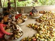 Indonesia y Singapur incrementan cooperación agrícola
