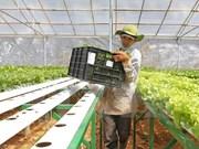 Compañía japonesa interesada en producción agrícola en Ha Nam