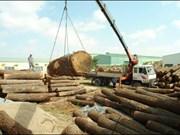 Aumentan exportaciones madereras vietnamitas a China