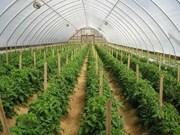 Vietnam y Japón robustecen cooperación agrícola