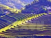 Terrazas vietnamitas entre 14 paisajes más surrealistas del mundo