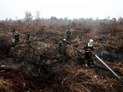Indonesia moviliza 25 aviones para apagar incendios