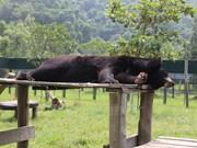 Osos salvados con nueva vida en Parque Nacional de Tam Dao