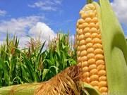 Primera granja de Vietnam recibe certificación orgánica internacional