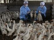 Dedica Vietnam gran esfuerzo por fomentar lucha contra gripe aviar