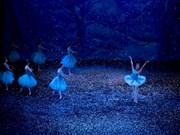 """""""El cascanueces"""" brindará la magia de Navidad al público vietnamita"""