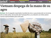 Prensa argentina resalta éxitos del sector agrícola vietnamita