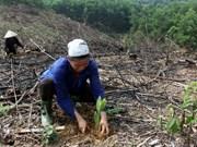 Vietnam: Proyecto forestal beneficiará a millones de personas de minorías étnicas