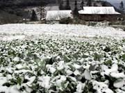 Vicepremier urge respaldar a pobladores afectados por fuerte frío