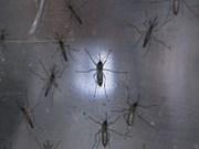 Indonesia orienta a sus ciudadanos evitar viajes a zonas infectadas por Zika