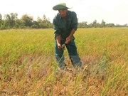 Vietnam, en lucha por mitigar afectaciones por salinización
