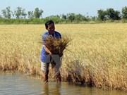 Proyecto para modernizar infraestructura en las localidades deltaicas de Mekong