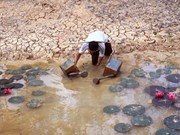 Obras hidroeléctricas en Mekong causan pérdidas de 231 millones de dólares