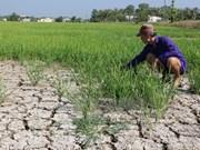 Cambio de estructura de cultivo en Vietnam: solución para sequía