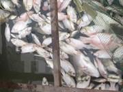 Prohíben comercio y consumo de productos marítimos muertos por causas inusuales