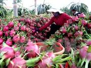 Exportación de frutas vietnamitas prevé alcanzar más de dos mil millones USD