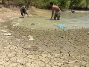 Más de dos millones de afectados por severa sequía en Camboya