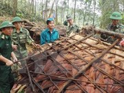 Vietnam realiza maniobra de respuesta a desastres