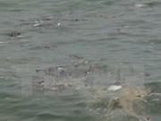 Proponen ayuda alimentaria y financiera para afectados por muerte masiva de peces