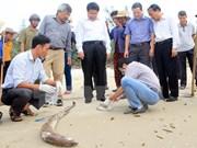 Vietnam aclarará pronto causas de muerte masiva de peces en costa central