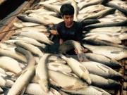 """Fuerza terrorista incita disturbios en Vietnam bajo máscara de """"ambientalista"""""""