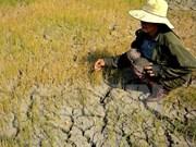 Provincia vietnamita pierde cerca de 380 millones de dólares por sequía