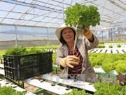 Necesita Malasia importar vegetales de Vietnam y otros países, según especialistas